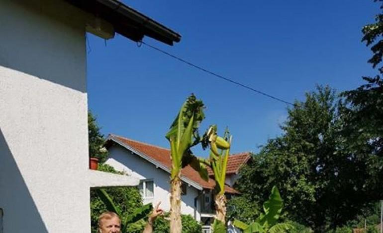 files/tesanj/banane2.jpg