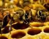Zvanično - pčele proglašene najvažnijim bićima na Zemlji