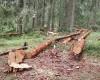 Mladić iz Teslića poginuo sijekući šumu